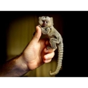 2 marmoset monkeys for rehoming